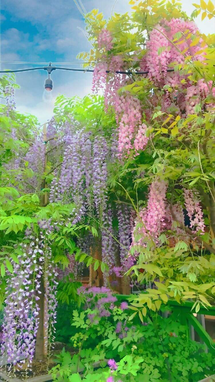Flowering trees in Spring and their legends | News India Times