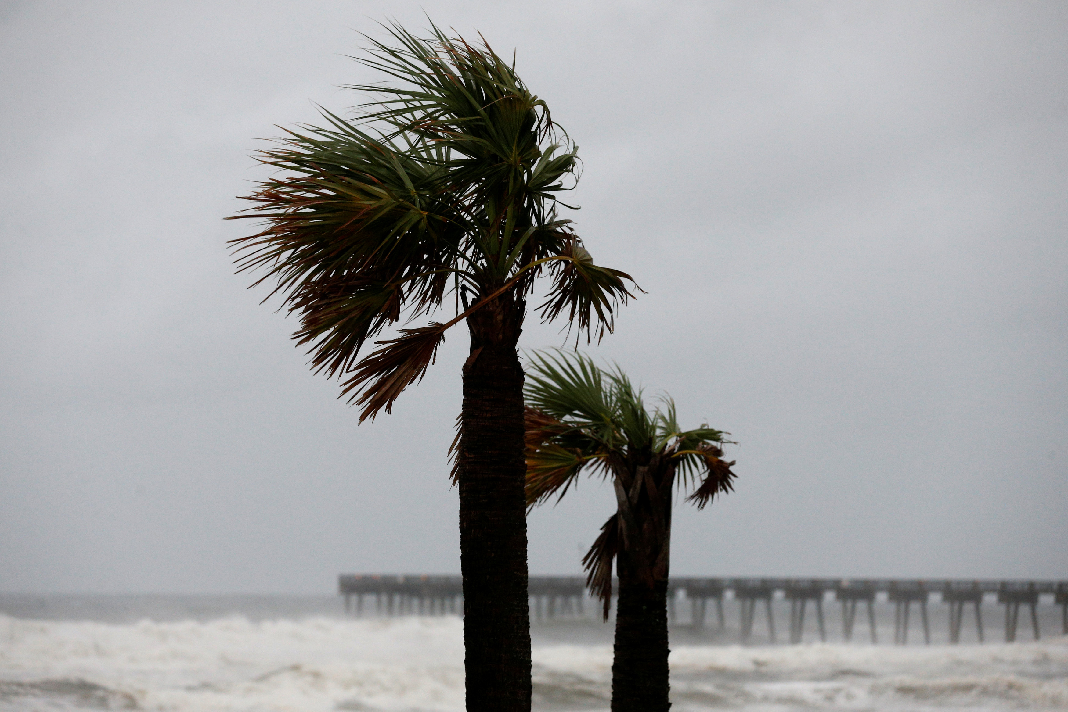 Palm trees are seen as Hurricane Michael approaches Panama City Beach Florida