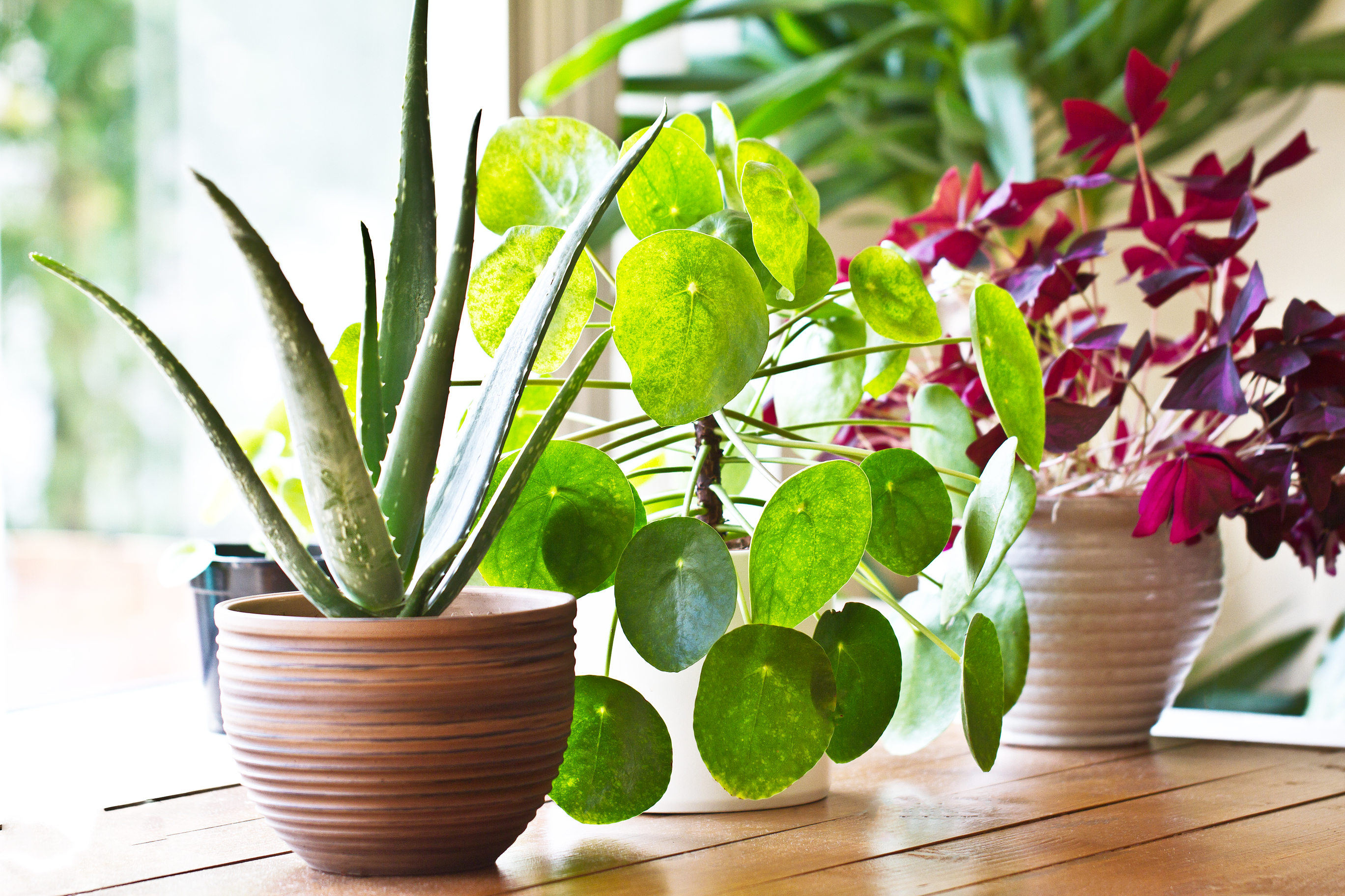 Millennials Fall in Love With Houseplants | News India Times