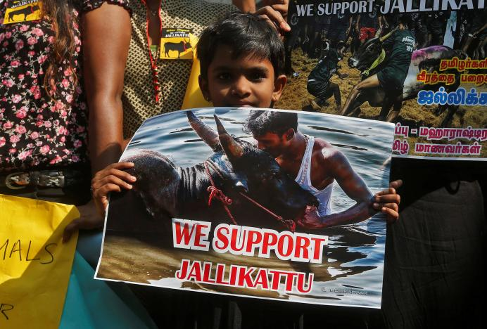 A child holds a sign during a protest demanding a reverse of the Supreme Court ban on the traditional bull-taming contest, known as Jallikattu, in Mumbai, India, January 21, 2017. REUTERS/Shailesh Andrade