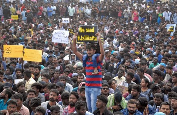 People attend a protest demanding to reverse a Supreme Court ban on the traditional bull-taming contests, known as Jallikattu, at the Marina beach in Chennai, January 19, 2017. REUTERS/Stringer